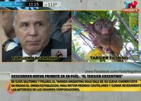 URGENTE: Descubren nuevo primate en Argentina El Tarsier &quot;Lorenzetti&quot; Argentino